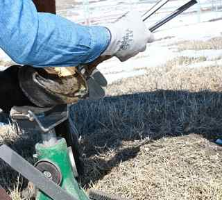 Hoof Nippers: a hoof trimmer using hoof nippers to trim the horse hooves