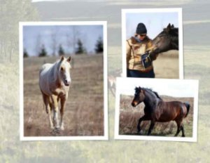 Horse care: how to train a horse, horse body language