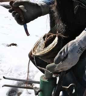 Hoof trimmer: Horse hoof resting on a hoof jack